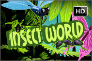 Insect World HD